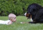 Pies i małe dziecko. Zgrany duet?